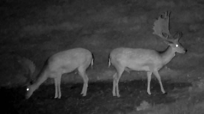 nocne pozorovanie zvierat